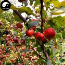 Buy Mini Malus Fruit Tree Seeds 120pcs Plant Octopus Begonia For Cute Apple