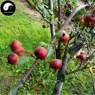 Buy Mini Malus Fruit Tree Seeds 30pcs Plant Octopus Begonia For Cute Apple