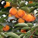 Buy Persimmon Fruit Tree Seeds 60pcs Plant Diospyros Kaki For Chinese Fruit Shi