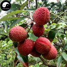 Buy Litchi Fruit Tree Seeds 30pcs Plant Litchi Chinensis For Lychee Li Zhi
