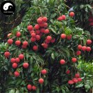 Buy Litchi Fruit Tree Seeds 60pcs Plant Litchi Chinensis For Lychee Li Zhi