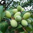 Buy White Olive Tree Seeds 6pcs Plant Green Olive Tree For Fruit Gan Lan
