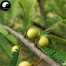Buy Phyllanthi Fruit Tree Seeds 30pcs Plant Phyllanthus Tree For Fruit Yu Gan