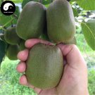 Buy Kiwi Fruit Tree Seeds 120pcs Plant Actinidia Chinensis For Fruit Kiwi