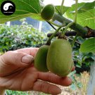 Buy Kiwi Fruit Tree Seeds 60pcs Plant Actinidia Chinensis For Fruit Kiwi