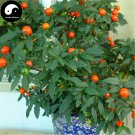 Buy Solanum Pseudocapsicum Tree Seeds 240pcs Plant Ornamental Orange Fruit Bonsai
