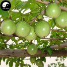 Buy Passiflora Fruit Tree Seeds 240pcs Plant Purple Passiflora For Eggs Fruit