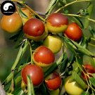 Buy Chinese Date Fruit Tree Seeds 100pcs Plant Ziziphus Jujuba For Sweet Jujube