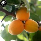 Buy Apricot Fruit Tree Seeds 25pcs Plant Armeniaca Vulgaris For Chinese Xing