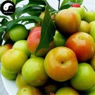 Buy Green Plum Fruit Seeds 100pcs Plant Prunus Salicina For Chinese Fruit Li