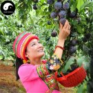 Buy Purple Plum Fruit Seeds 100pcs Plant Prunus Salicina For Chinese Fruit Li