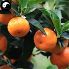 Buy Sugar Orange Fruit Seeds 160pcs Plant Citrus Reticulata For Mandarin Orange