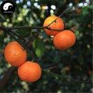 Buy Sugar Orange Fruit Seeds 40pcs Plant Citrus Reticulata For Mandarin Orange