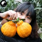 Buy Ugly Orange Fruit Seeds 120pcs Plant Citrus Tree For Fruit Sweet Orange
