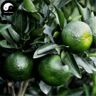 Buy Lu Orange Fruit Seeds 120pcs Plant Citrus Tree For Fruit Sweet Orange Lu Gan