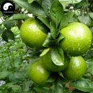 Buy Gong Orange Fruit Seeds 240pcs Plant Citrus Tree For Fruit Sweet Orange