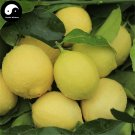 Buy Citrus Limon Fruit Seeds 160pcs Plant Lemon Orange Tree For Fruit Ning Meng