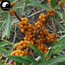 Buy Seabuckthorn Fruit Seeds 200pcs Plant Buckthorn Berry For Fruit Sha Ji