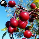 Buy Malus Fruit Tree Seeds 60pcs Plant Malus Baccata For Wild Fruit Malus