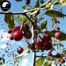 Buy Malus Fruit Tree Seeds 120pcs Plant Malus Baccata For Wild Fruit Malus