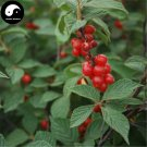 Buy Cherry Fruit Tree Seeds 120pcs Plant Cerasus Tomentosa For Wild Fruit Cherry