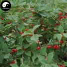 Buy Cherry Fruit Tree Seeds 240pcs Plant Cerasus Tomentosa For Wild Fruit Cherry