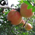 Buy Pomegranate Fruit Tree Seeds 120pcs Plant Punica Granatum For Berry Fruit