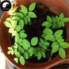 Buy Rare Scented Rosewood Tree Seeds 40pcs Plant Dalbergia Odorifera Huang Tan