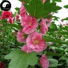 Buy Althaea Rosea Tree Seeds 120pcs Plant Althaea Rosea For Shu Kui Flower