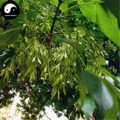Buy Fraxinus Chinensis Tree Seeds 120pcs Plant Ash Tree For Fraxinus Bai La