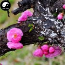 Buy Amygdalus Triloba Tree Seeds 120pcs Plant Triloba For Pink Flower Yu Ye Mei