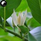 Buy Magnolia Tree Seeds 100pcs Plant Magnolia Denudata For White Flower Yu Lan