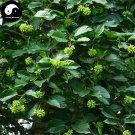 Buy Camptotheca Tree Seeds 200pcs Plant Camptotheca Acuminata Tree For Xi Shu