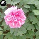 Buy Peony Tree Seeds 30pcs Plant Paeonia For Chinese Flower King Mu Dan