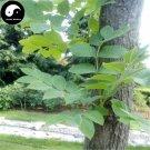 Buy Fraxinus Mandshurica Tree Seeds 50pcs Plant Fraxinus Mandshurica Tree For Wood