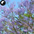 Buy Jacaranda Mimosifolia Tree Seeds 60pcs Plant Chinese Blue Flower Tree
