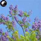 Buy Jacaranda Mimosifolia Tree Seeds 30pcs Plant Chinese Blue Flower Tree