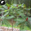 Buy Torch Tree Seeds 100pcs Plant Rhus Typhina Tree For Lacquer Tree Huo Ju Shu