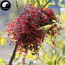 Buy Pistache Tree Seeds 200pcs Plant Pistacia Chinensis Tree For Pistache Tree