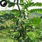 Buy Gleditsia Tree Seeds 60pcs Plant Gleditsia Sinensis Tree For Honeylocust