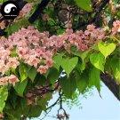 Buy Catalpa Bungei Tree Seeds 60pcs Plant Catalpa Tree For Chinese Qiu Shu