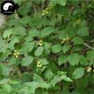 Buy Alnus Cremastogyne Tree Seeds 120pcs Plant China Alder Tree For Qi Mu Shu