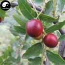 Buy Choerospondias Axillaris Tree Seeds 20pcs Plant Chinese Nan Suan Zao Tree