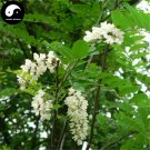 Buy False Acacia Tree Seeds 50pcs Plant Robinia Pseudoacacia For Black Locust