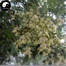 Buy Sophora Japonica Tree Seeds 60pcs Plant Sophora Japonica Chinese Guo Huai