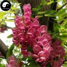 Buy Sophora Tonkinensi Tree Seeds 240pcs Plant Sophora Tonkinensi Guo Huai Shu