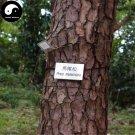 Buy Pinus Massoniana Tree Seeds 200pcs Plant Mason Pine China Pinaster Tree