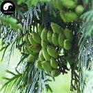 Buy Sabina Pingii Tree Seeds 120pcs Plant Arborvitae Chinese Xiang Bai Shu