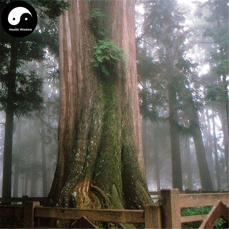 Buy Chamaecyparis Formosensis Matsum Tree Seeds 240pcs Plant Cedar Tree Hong Hui