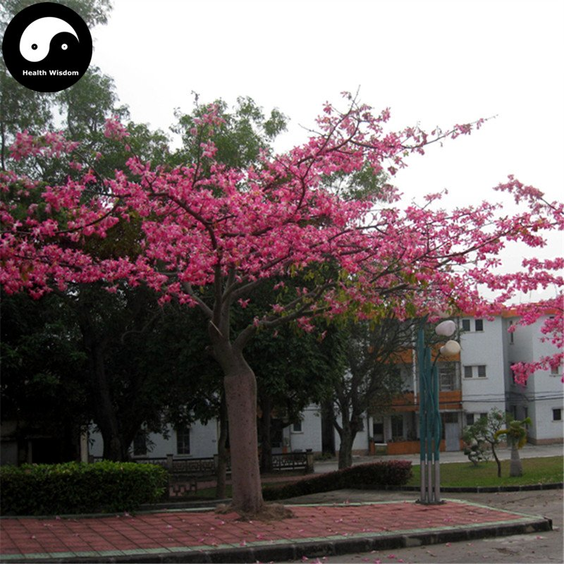 Buy Floss-silk Tree Seeds 100pcs Plant Ceiba Insignis Tree Chinese Beauty Tree